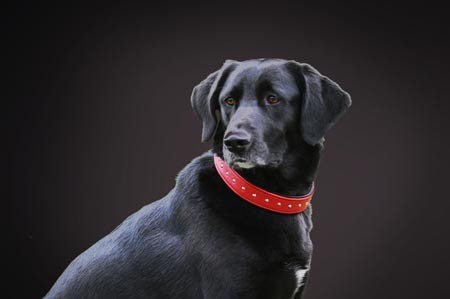Rotes Hundehalsband aus Leder, Sattleria in Winterthur