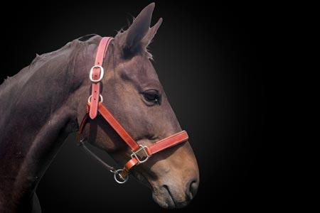 Entdecke unsere Galerie für Sattlerarbeiten Pferde