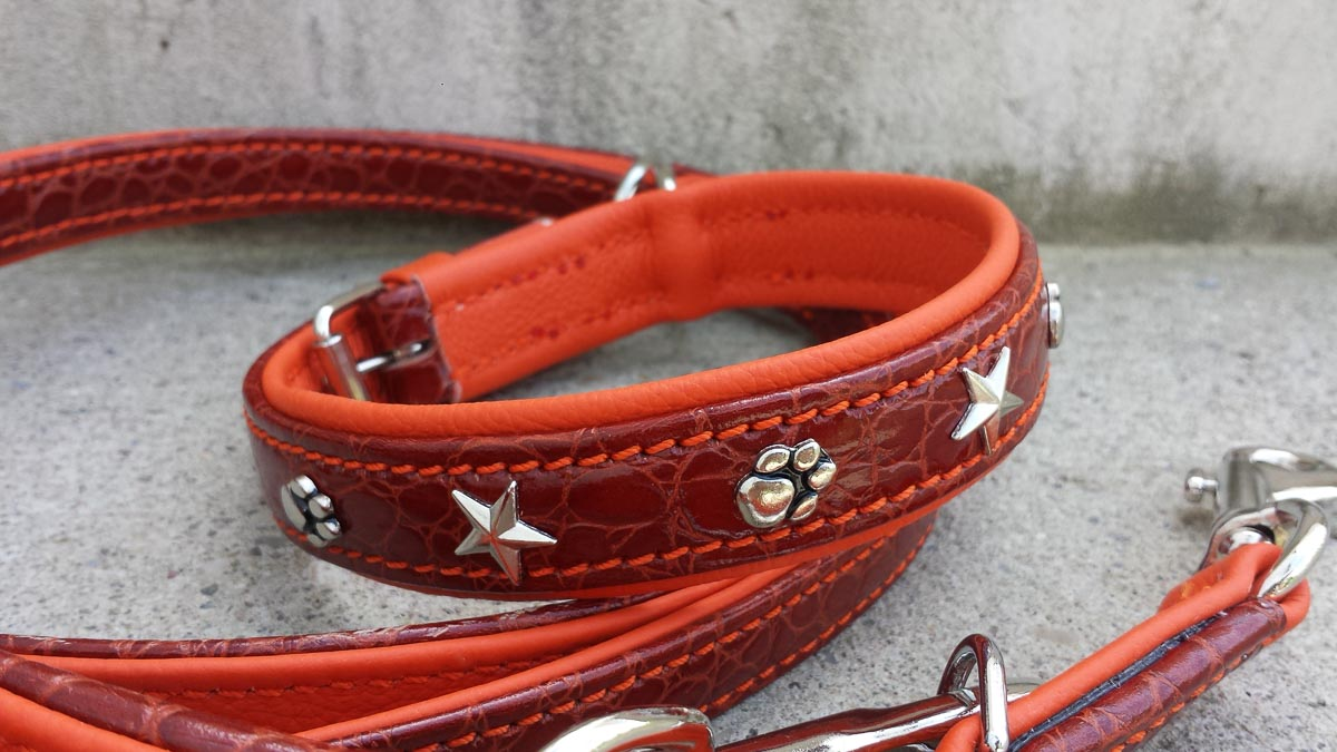 Hundehalsband und Hundeleine, kroko-orange
